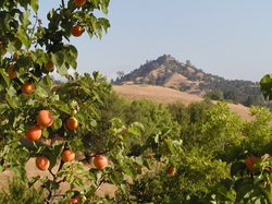 Silent Meditation Retreat Center in Northern California, accessible from San Francisco, Sacramento and Los Angeles apricots photo