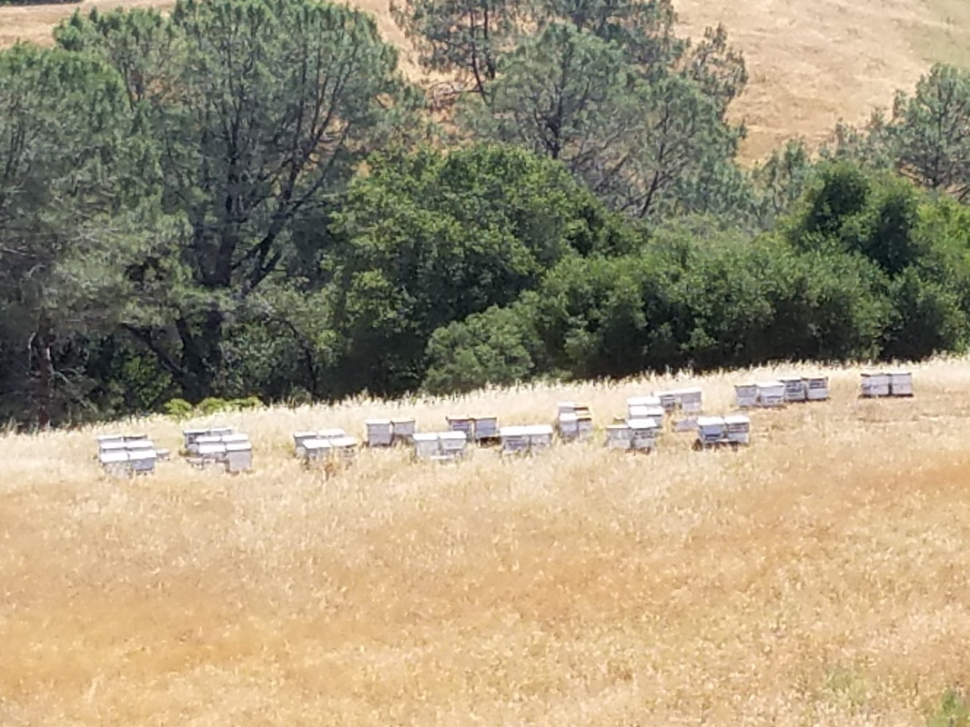 Silent Meditation Retreat Center in Northern California, accessible from San Francisco, Sacramento and Los Angeles hay bales photo