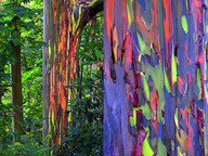 Silent Meditation Retreat Center in Northern California, accessible from San Francisco, Sacramento and Los Angeles painted trees photo